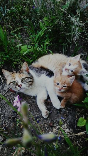 Cat with her kitty Animal Themes Domestic Cat Pets Outdoors Plant Day Relaxation Animals In The Wild Nature Grass Young Animal MammalHigh Angle View Domestic Animals No People First Eyeem Photo