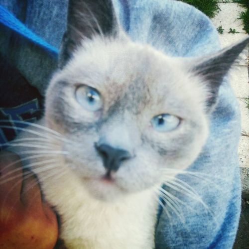 Cat♡ Mon Chat  Animals