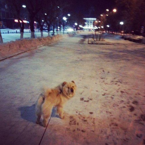 Гуляем по аллее) чау собака Аллея Puppy white winter walk instamood instapic god bless my dog