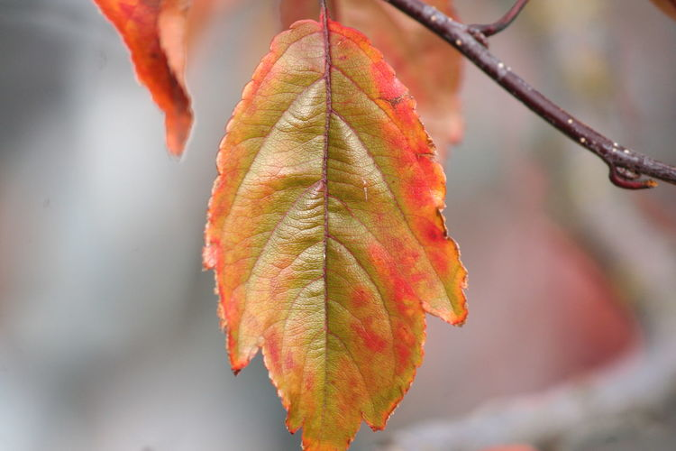 Close-up of leaf during autumn