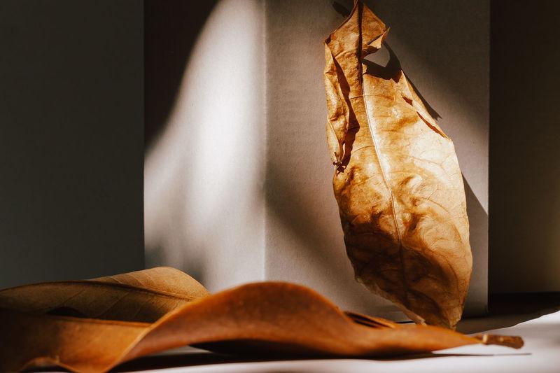 Autumn leaves fallen on the ground, concept of autumn and nine season.