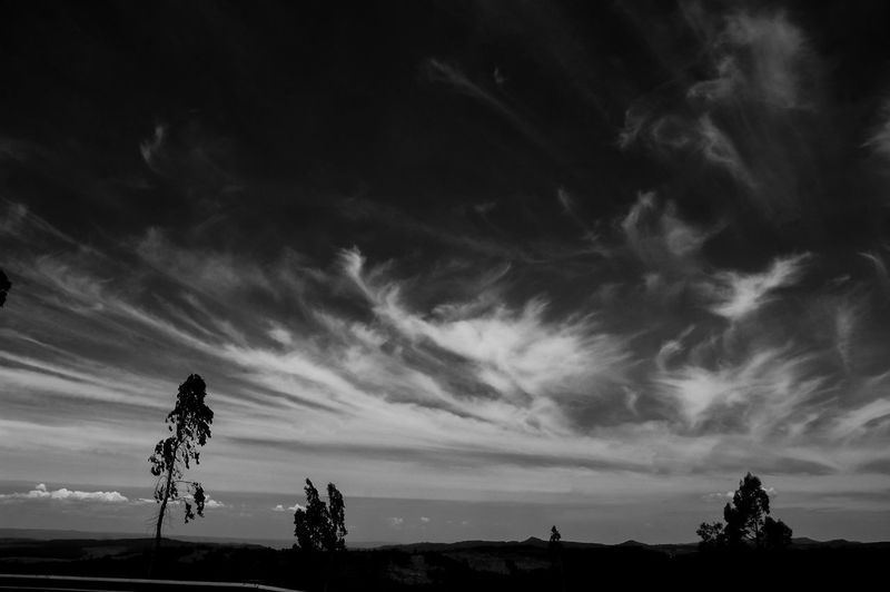 Black and whites also bring out the sky really well. Cloud - Sky Silhouette Low Angle View Sky Tree No People Outdoors Nature Day Black & White Photography