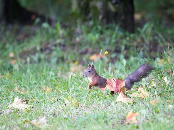 Adam, you? Animal Animals In The Wild Fall Beauty Grassy Nature Squirrel