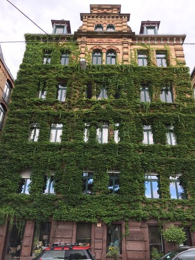 Heusteigviertel Mozartstraße Stuttgart Building Exterior Day Green Color Growth Ivy Low Angle View Outdoors Sky Stuttgart Süd Unedited Photo