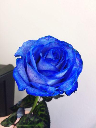 Blue Rosé Love Forever Nice Inlovehappygirl First Eyeem Photo