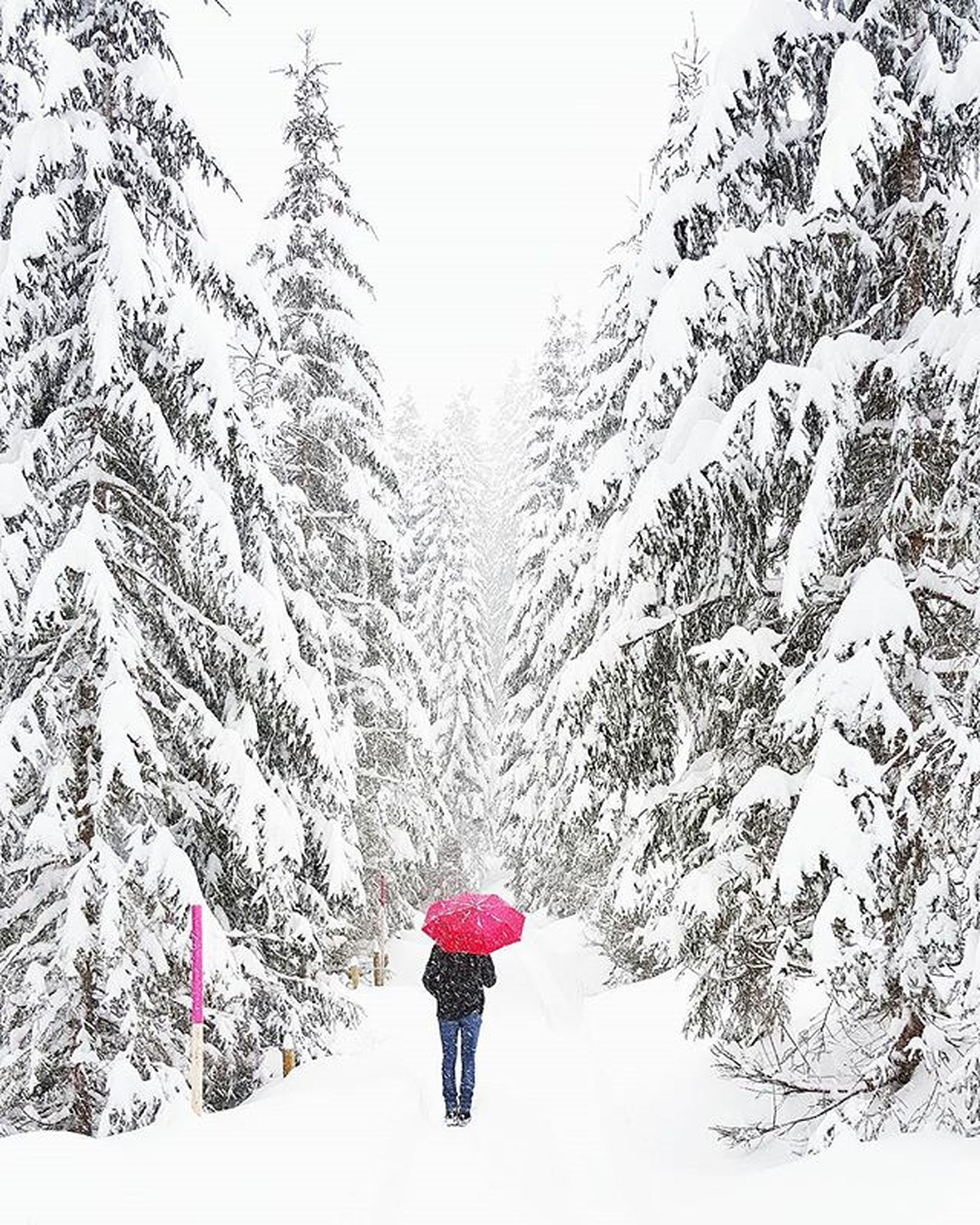 winter, snow, lifestyles, cold temperature, leisure activity, rear view, season, full length, tree, walking, weather, men, person, warm clothing, standing, nature, covering, unrecognizable person