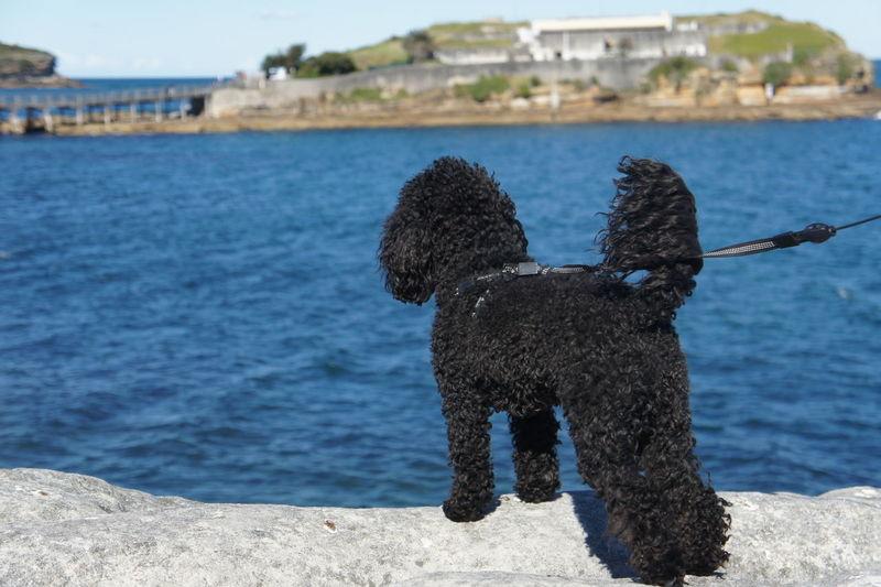 Dog by sea