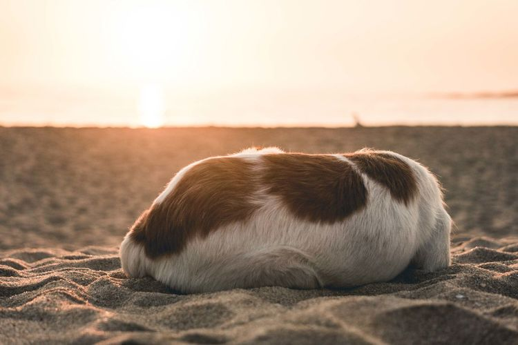 Close-up of a dog resting on a land