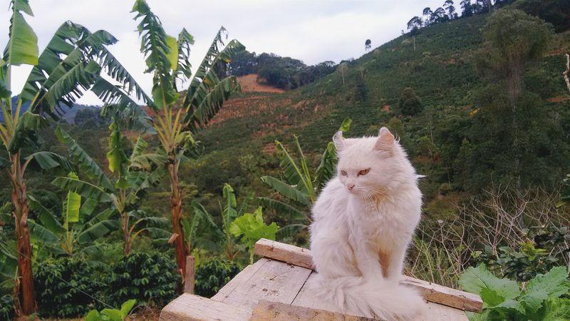 White. Animals Cat Nature Vcscocam Pet EyeEm Best Shots Tranquility Minas Gerais No Filter Live For The Story EyeEm Selects Pet Portraits