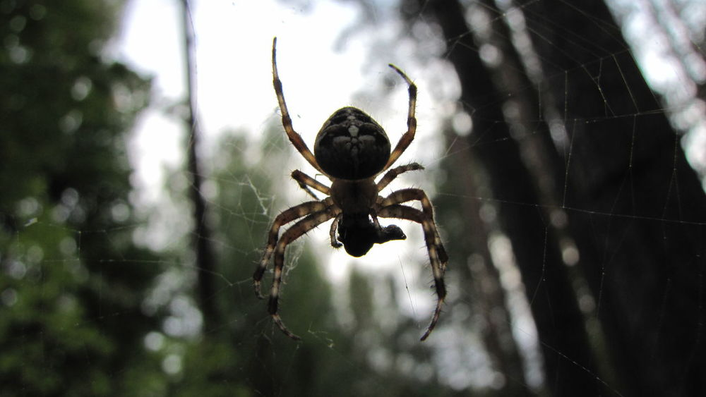 Spider Spiderman Spider Web Spider Silk Darkness And Light Check This Out Capture The Moment Giant Predator Getting Creative Macro Beauty