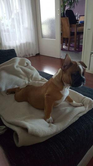 Tabubruch ... Frieda hat ihren Platz auf der Couch