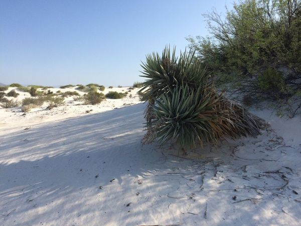 Calcium Dunes Cuatrocienegas Calcium Dunes Calcium Dunes Endemic Endemicflora Landscape Natural Beauty Natural Phenomenon No Filter
