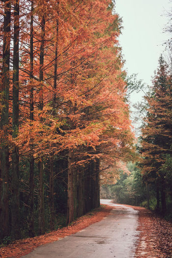 Autumn road in rainy day Tree Plant Autumn The Way Forward Direction Change Forest Nature Road No People Tranquility Fall