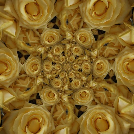 Showcase March rose 3drender Flowers Kaleidoscope Photoedit Mix Yourself A Good Time