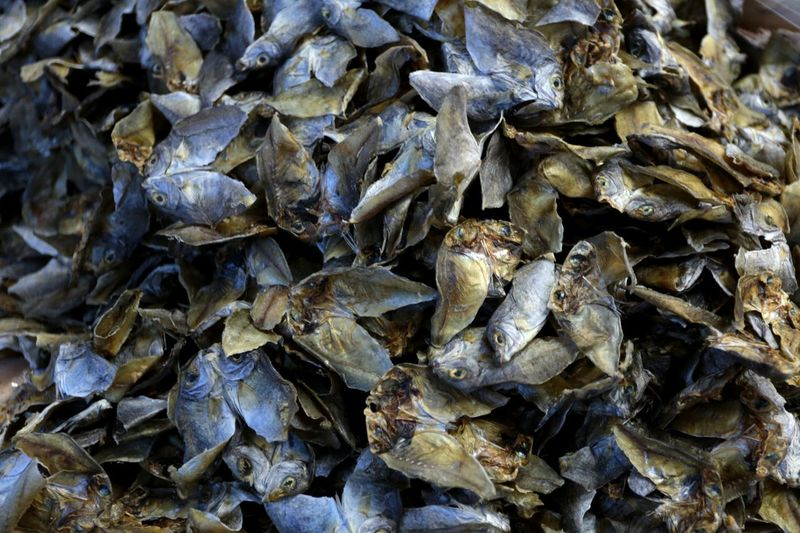 Dried danggit. Danggit  Fish Dried Fish  Delicacy