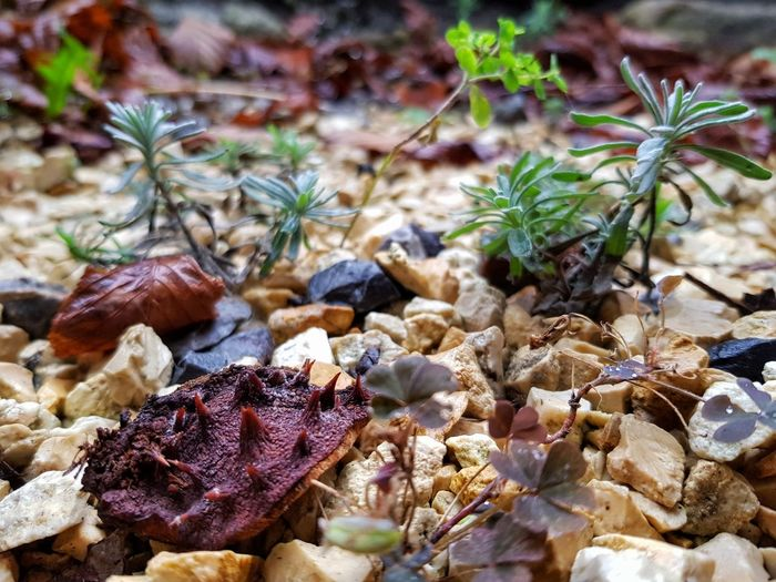 Miniwäldchen.. 🌱 View Out Of My Cellar Window Nature Looking Down Plant Outdoors Close-up Beauty In Nature Perspectives On Nature From My Point Of View Autumn Eye4photography  Nature_collection The Simple Things Miniforest Crafted Beauty