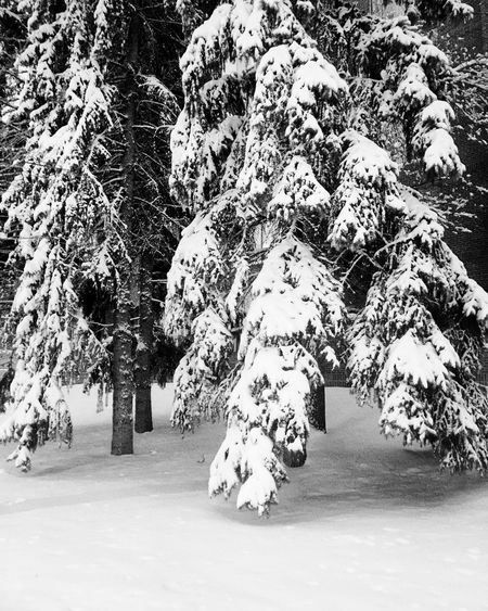 Winter has returned! Snow Winter Cold Temperature Tree Nature Beauty In Nature No People Shades Of Winter