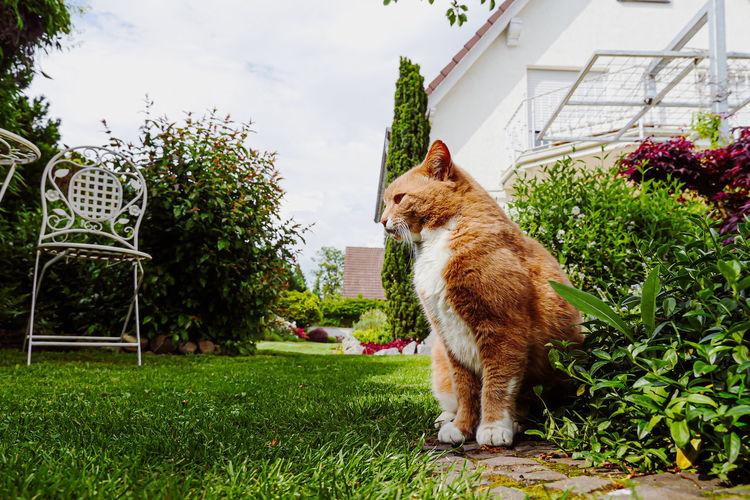 Full length of a cat in yard