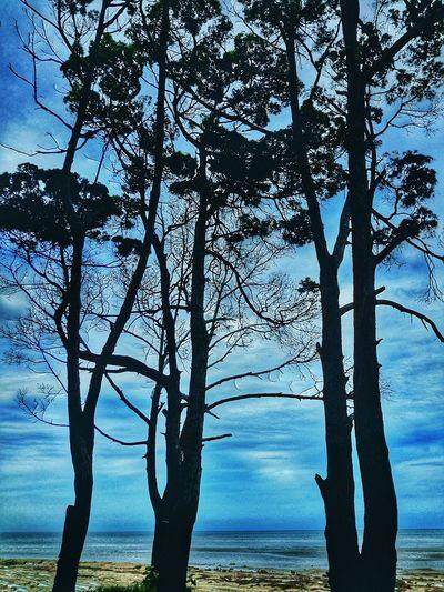 Sillhouette Blue Sky Beach Trees