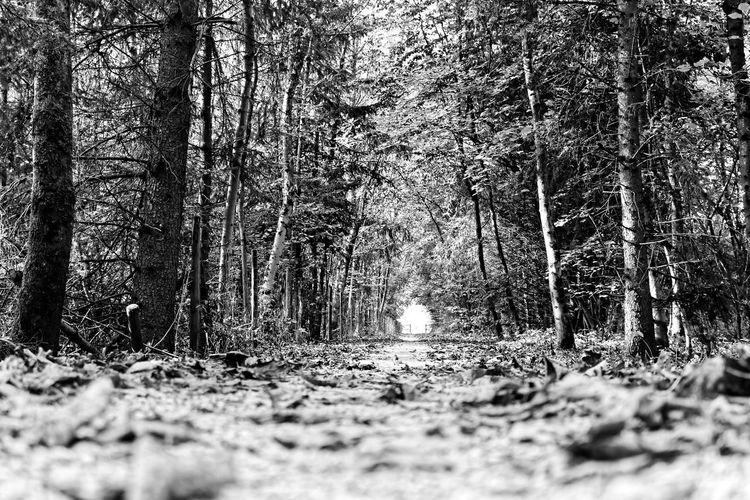 Hope Light Way