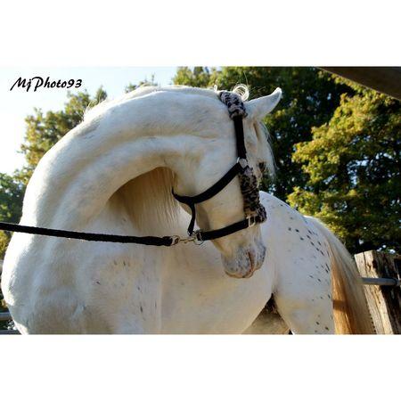 Love Horse Horses Nature Beautiful