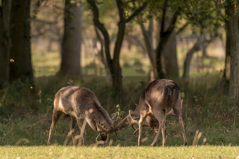 Full length shot of deers  against trees