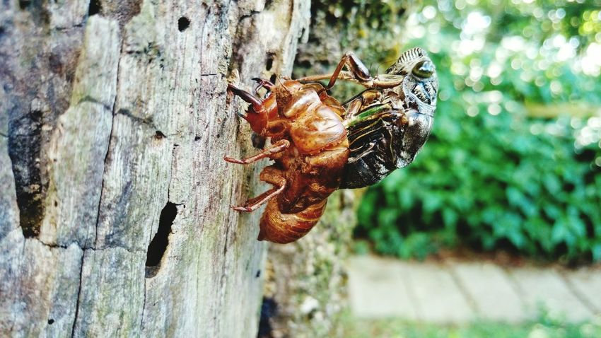 Nature Power Tree Of Life Holding A Tree On A Tree Nature On Your Doorstep Nature Cicada Getting Inspired Trees And Nature Summer Showcase July Life Is Beautuful