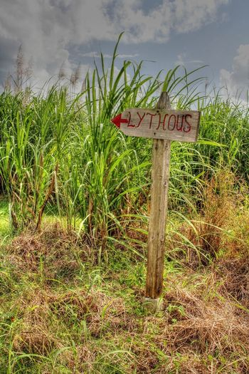 Funny Light House Morant Point Jamaica Lythous Road Sign Sugar Cane Field Sunny Day