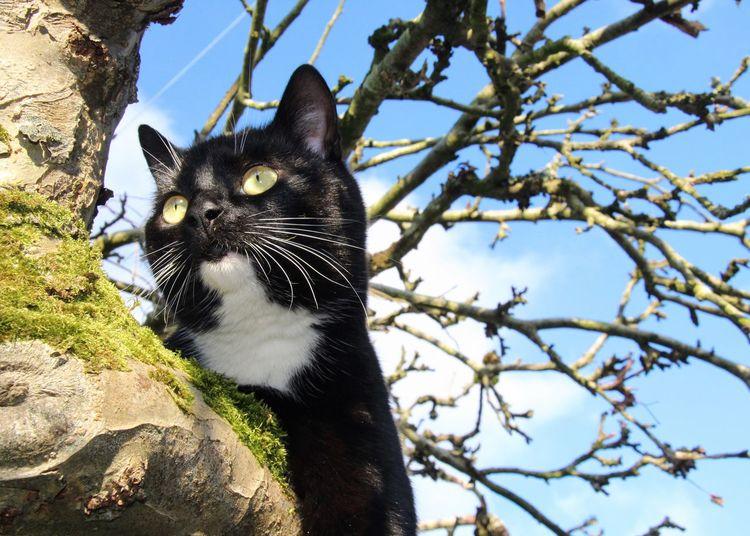 Pet Portraits Portrait Tadaa Community Domestic Cat Just Fleur