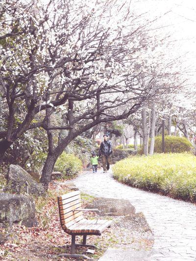 南砂町の公園。梅が綺麗に咲いてた。 Tokyo Days Japan