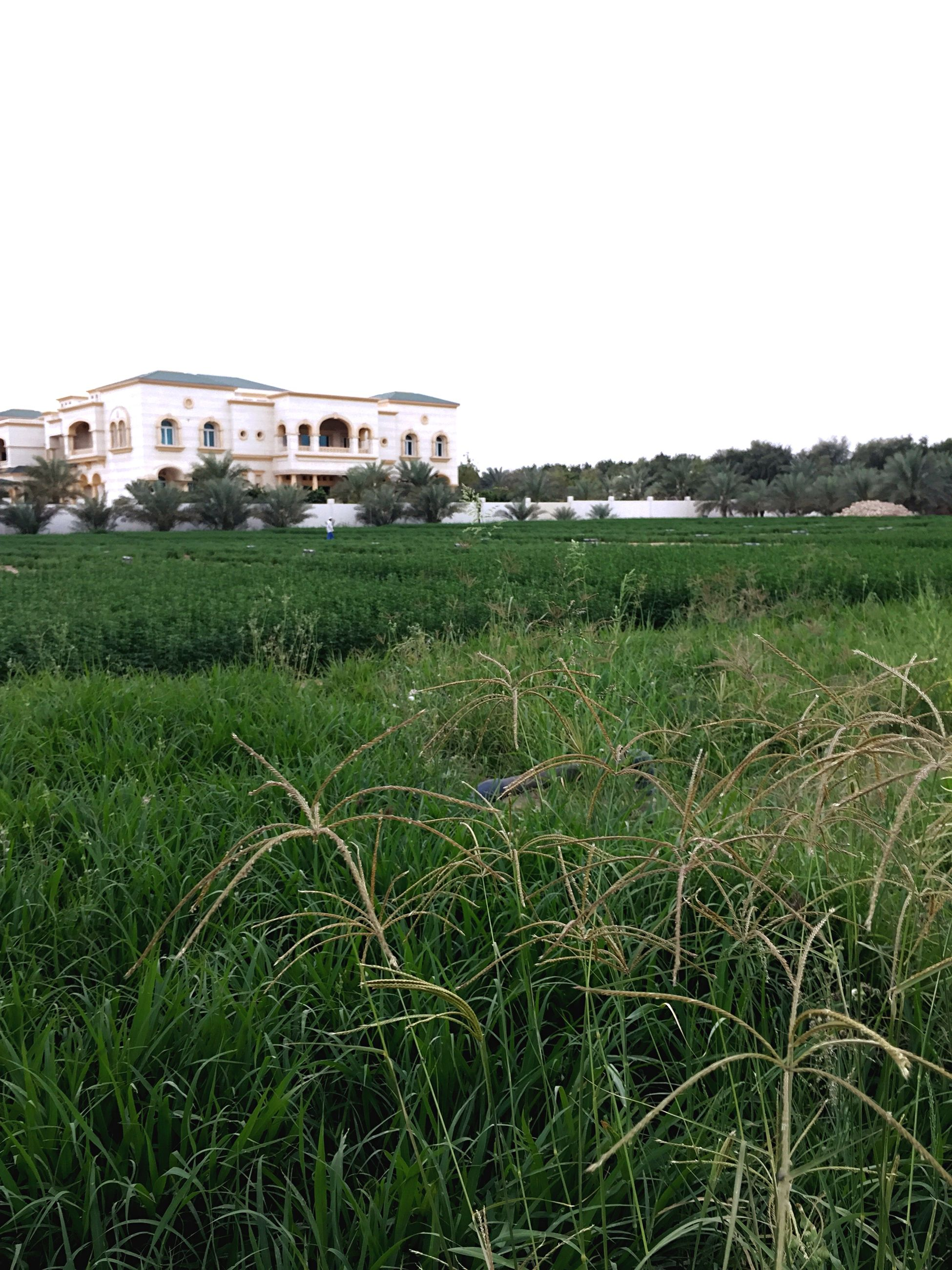grass, clear sky, building exterior, architecture, built structure, field, green color, grassy, copy space, growth, house, plant, nature, day, outdoors, sky, no people, tranquility, residential structure, landscape