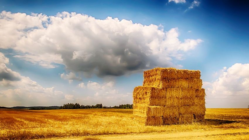 Field Field Cloud - Sky Sky Landscape Agriculture Nature Rural Scene Scenics No People Beauty In Nature Hay