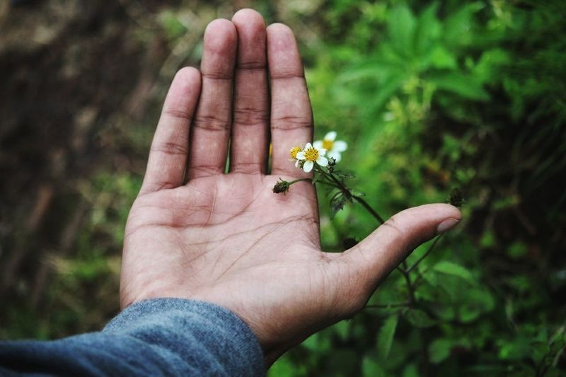 Human Body Part Human Hand Holding Flower One Man Only Nature Day People Outdoors Close-up Planet Earth Earth_Collections Grass EyeEmNewHere EyeEm Best Shots EyeEm Selects India Beauty In Nature Nature Bonding Euphoria Fog Friendship