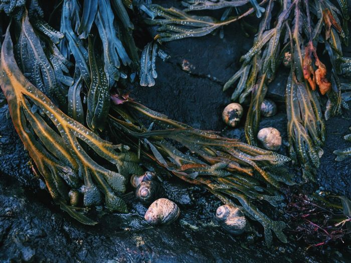 High angel view of seaweeds and seashell on shore