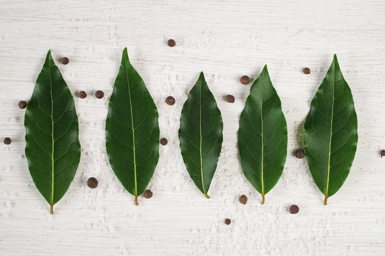Leaf Green Color Nature Close-up Directly Above Leaves Cuisine Laurel  Bay Leaves Fresh Herbs  Pepper Salt White Background Kitchen Laurel Leaves Seasoning Healthy Aromatherapy Oil Aromatic Herb Spices Ingredients For Cooking Aromatic Green Leafs