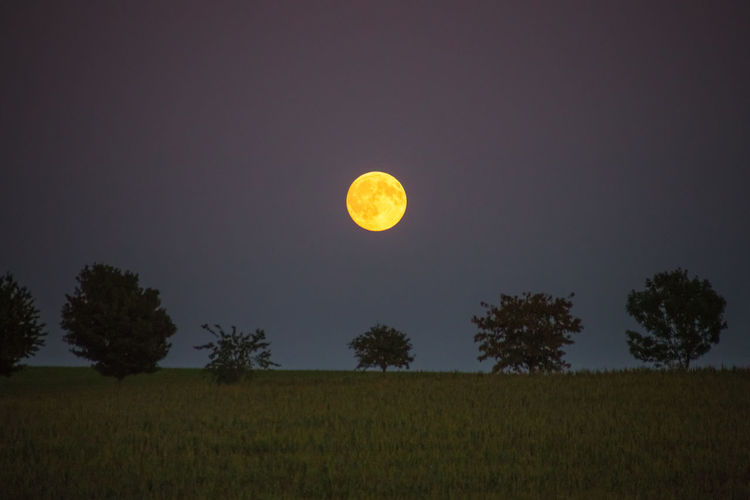 Moon Moon Shots Astronomy Beauty In Nature Field Full Moon Idyllic Land Landscape Moon Moon Light Moonlight Moonphotography Moonshine Night Outdoors Planetary Moon Scenics - Nature Sky Space Tranquil Scene Tranquility