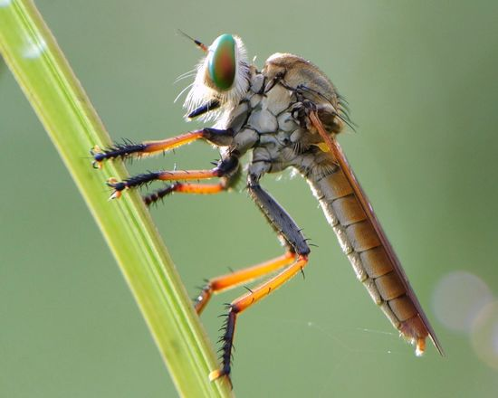 Insect Animal Wildlife Animal Themes Stereo Animals In The Wild One Animal No People Nature Close-up Outdoors Damselfly