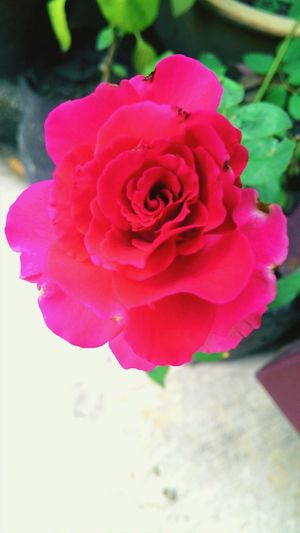 Flowers #flower #TagsForLikes #petal #petals #nature #beautiful #love #pretty #plants #blossom #sopretty #spring #summer #flowerstagram #flowersofinstagram #flowerstyles_gf #flowerslovers #flowerporn #botanical #floral #florals #insta_pick_blossom #flower