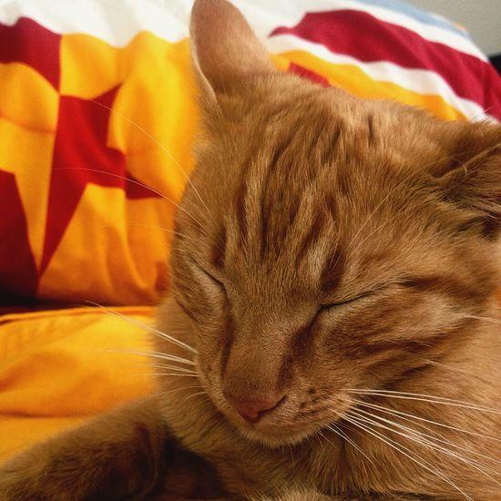 Kedim  Ismi Aslan Uyku Vakti GalataSaray Aşkı ❤️💛 Iyigeceler