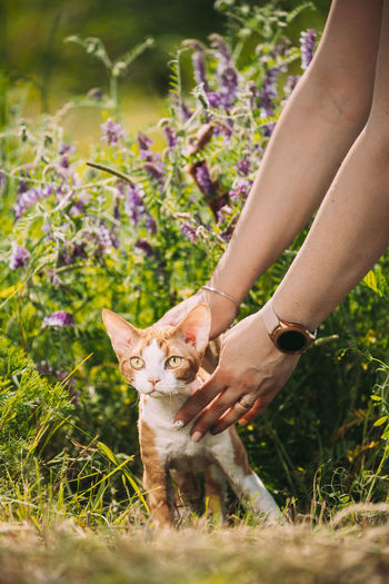 Midsection of woman with dog in flower field