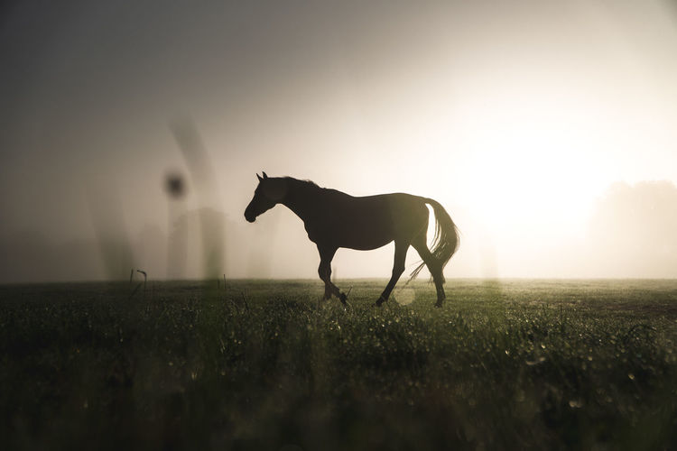 Silhouette horse standing on field against sky