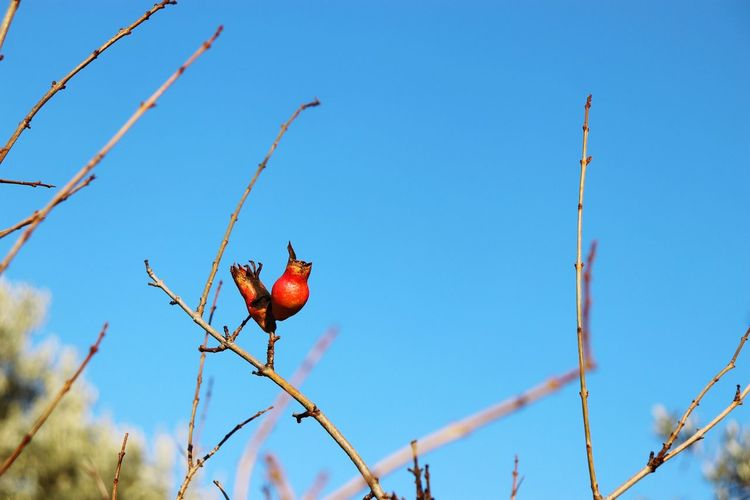 EyeEm Selects Red Bird Animal Blue Outdoors Animal Wildlife No People Day Nature Close-up Branch