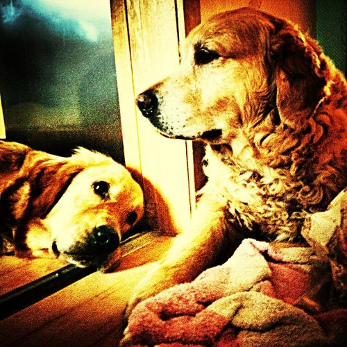 Great dogs
