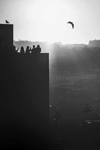 Silhouette birds flying over buildings in city