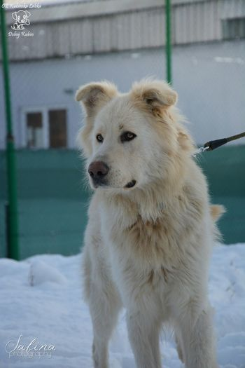 Mišo from the shelter :) Photography Photo Winter Dog Walking Animal Dog Shelter Beautiful Cute Doglover