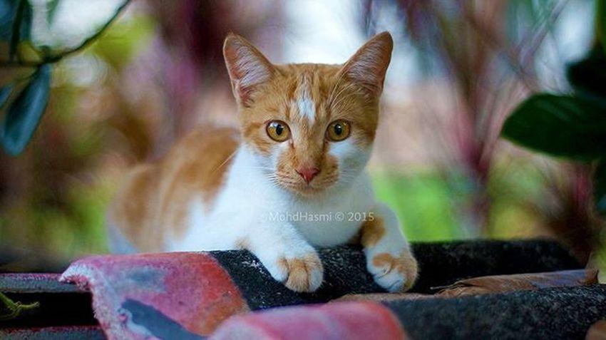 Time lapaq ja baru nak rapat.. Kucingkampung Kulim Cat Kucing Straycat 50mm Nikkor Sony Potrait Bokeh Menandcatscontest