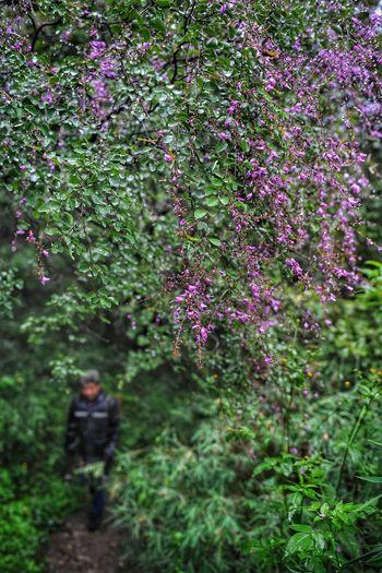 Man walking on flowering plant