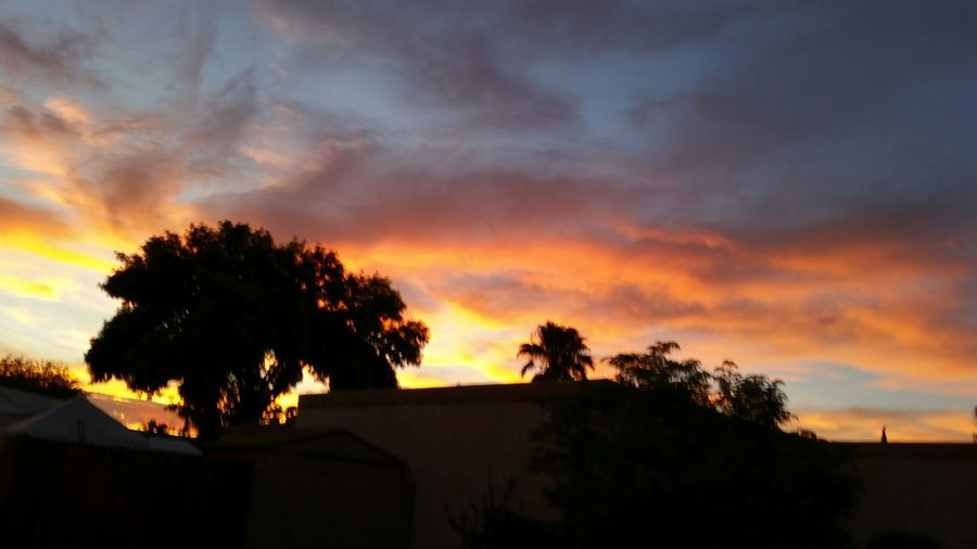 mother nature showing off Nature Sunset In Tucson Breathtaking Sunset Tucson Arizona  Beautiful Nature Sunset Silhouettes Brilliant Colors Brilliant Colour 4