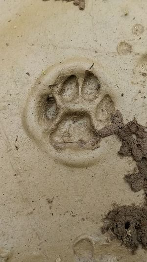 High angle view of human face on sand