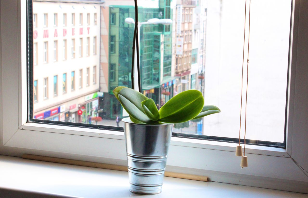 Potted Plant On Window Sill Against Buildings